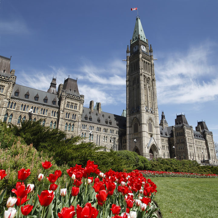 Canadian Parliament building and red tulips